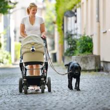 Les totems d'hygiène canine pour partager l'espace public