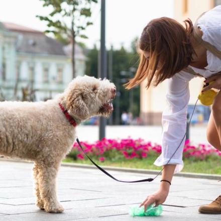 Ramasser les déjections canines, un geste citoyen