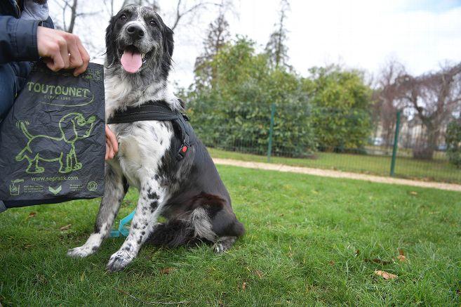 Les sacs à crottes de chien désormais biodégradables et compostables à Moulins